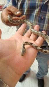 змейка м-рь Панагия Федуса